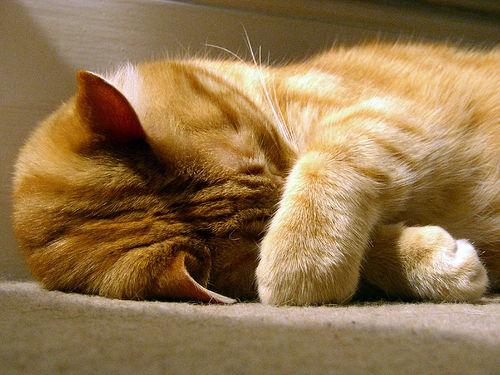 http://www.poppyspetcare.co.uk/assets/images/CatSleep.jpg